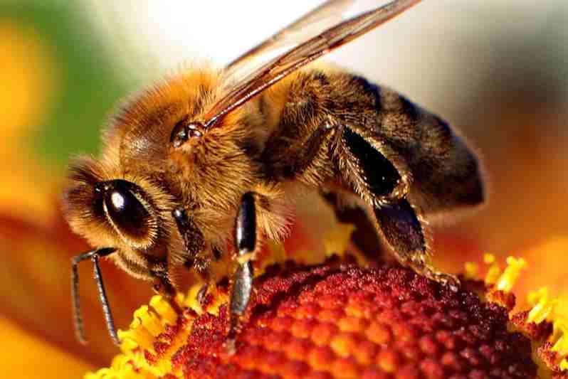 Domowe sposoby na łagodzenie skutków po ukąszeniu owadów. dy ukąsi osa, gdy ugryzie pszczoła, komar, kleszcz,
